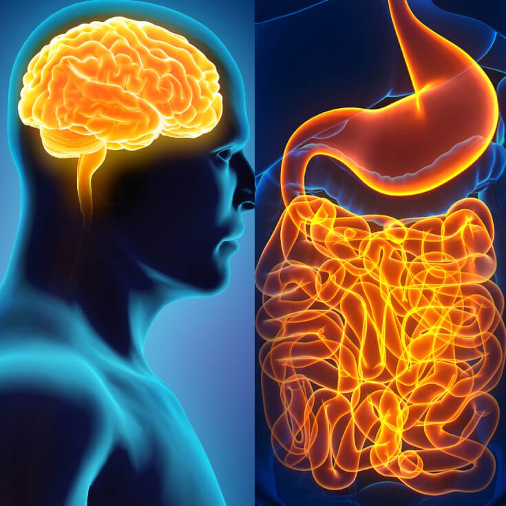 the gut and brain work together